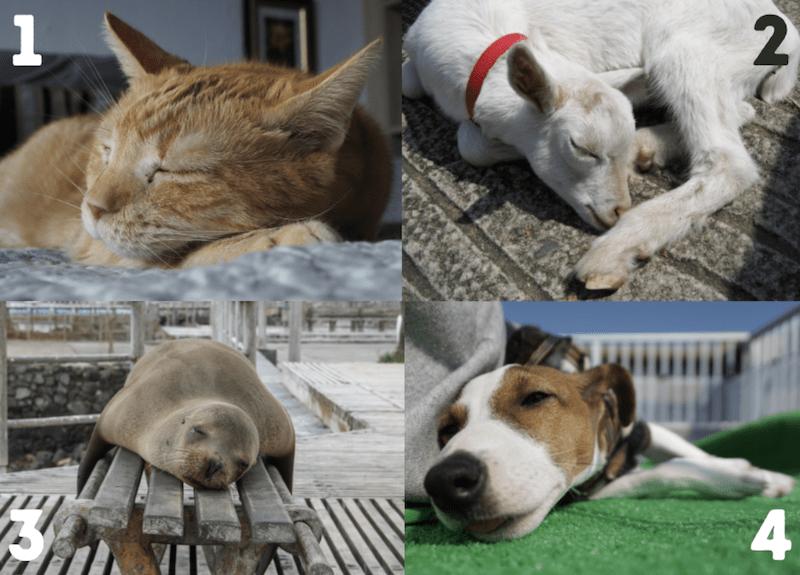 Resting Pets